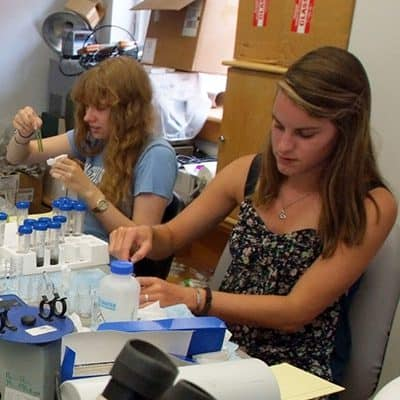 Students of biology professor Bill Hamilton conduct laboratory tests on bison dung they brought back from a research trip to Yellowstone National Park.