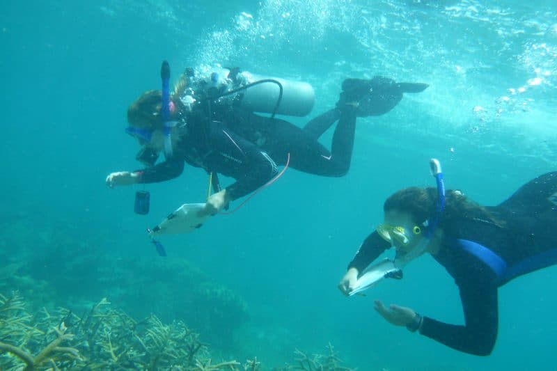 jjj-800x533 W&L Researchers See Coral Decline