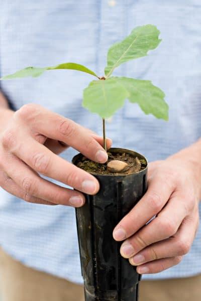 oak_tree_boys2-400x600 Heart and Soil